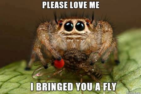 I bring you a fly!