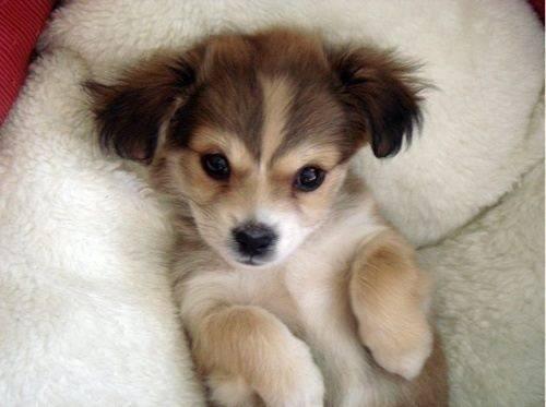 puppie love