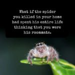 spider roommate